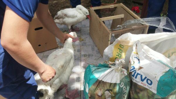 Yurda kaçak yollardan hayvan sokan 3 şüpheli serbest kaldı