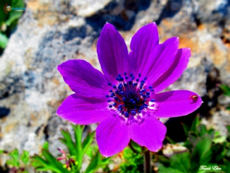 SARDOS'tan Korudağ Çiçekleri
