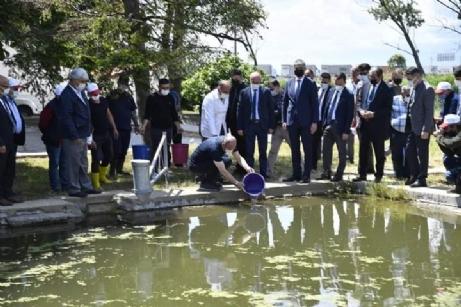 Yavru Balıklar Havuza Salındı
